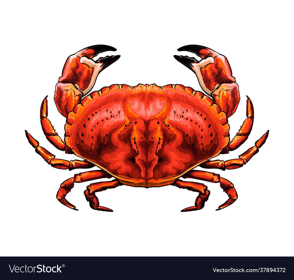 Red crab from a splash watercolor colored