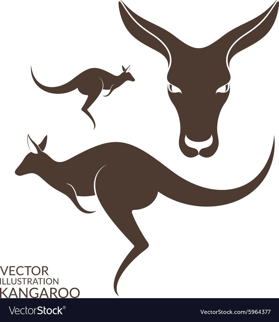 Kangaroo Isolated animals on white background