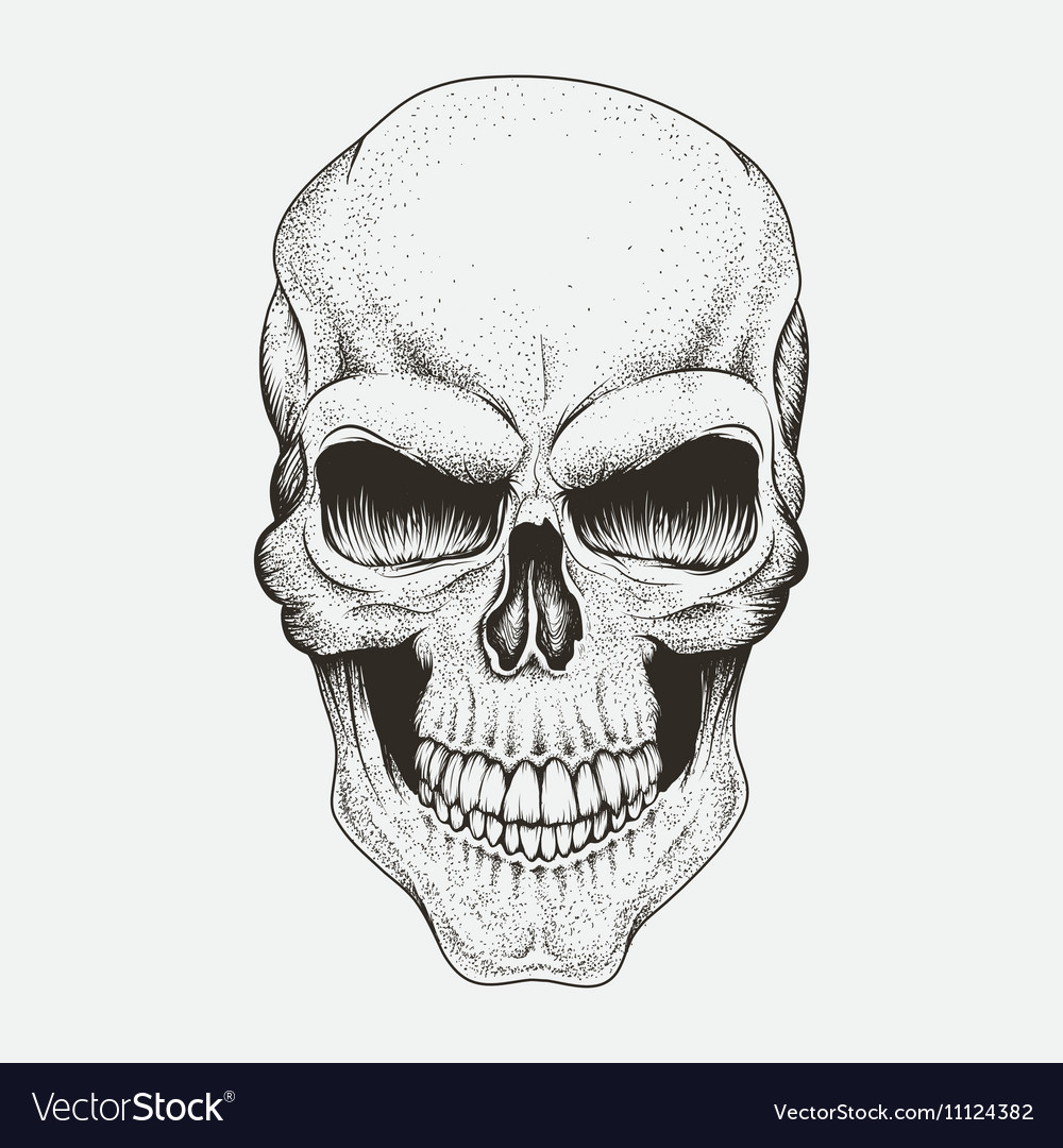 Scary skull of human Royalty Free Vector Image  Scary skull of ...