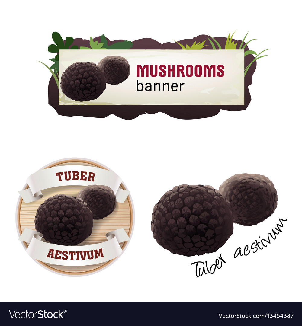 Set of mushroom banner badge sticker
