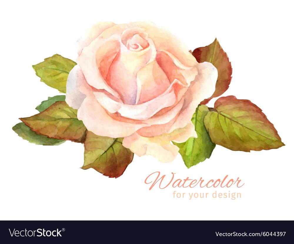 Rose watercolor for greeting