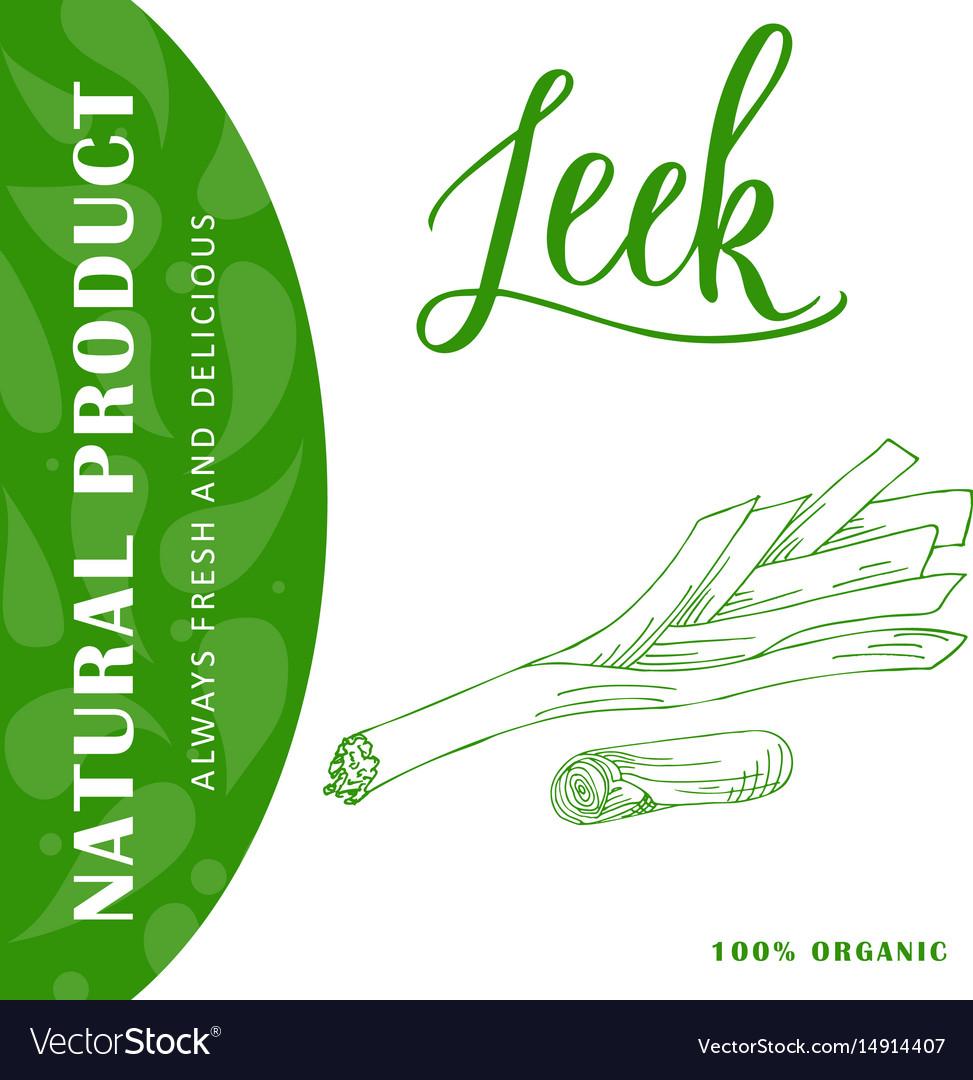 Vegetable food banner leek sketch organic food vector image