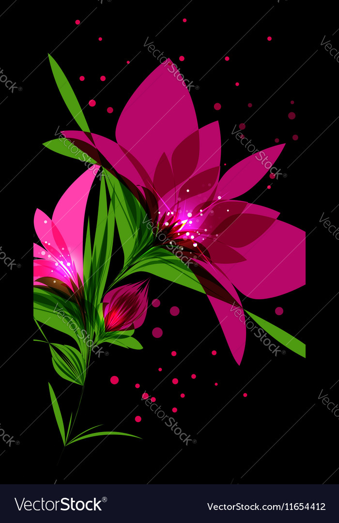 Bright Pink Flower On Black Background Vector Image