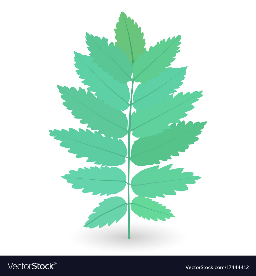 Colorful naturalistic green leaves on branch vector image