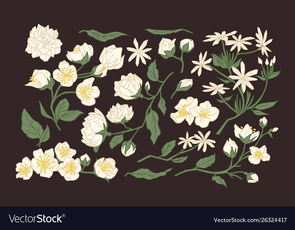 Collection elegant detailed botanical drawings