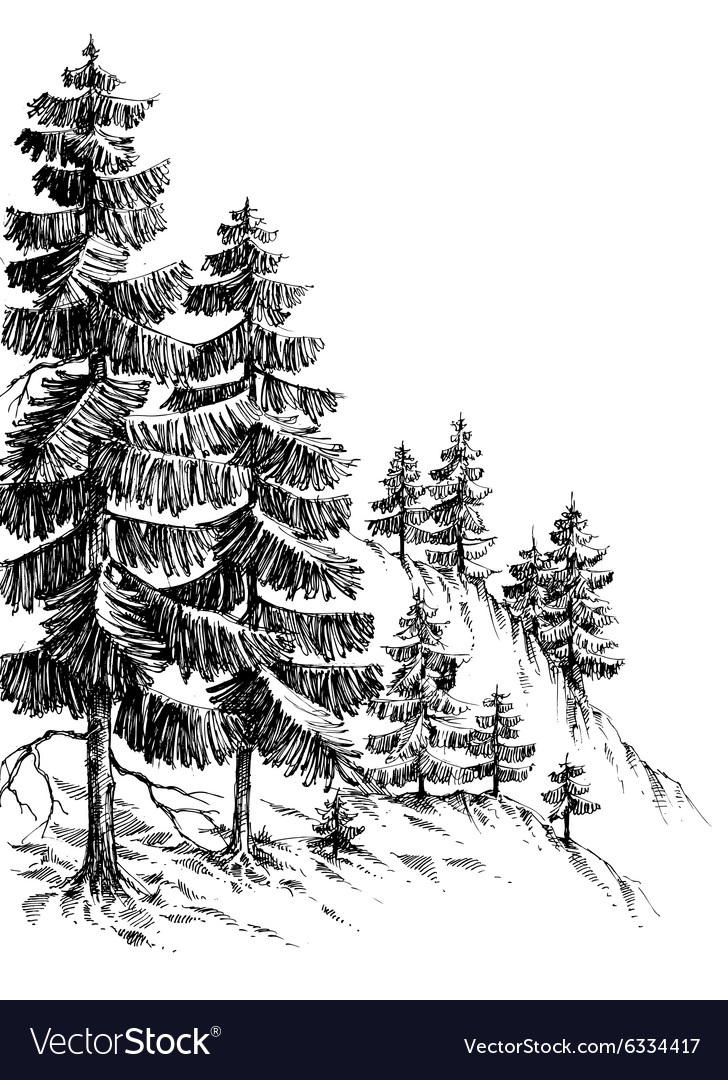 Pine forest winter mountain landscape drawing