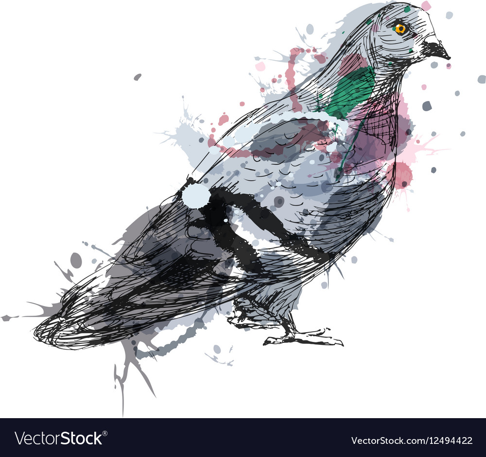 Colored hand sketch of a pigeon vector image
