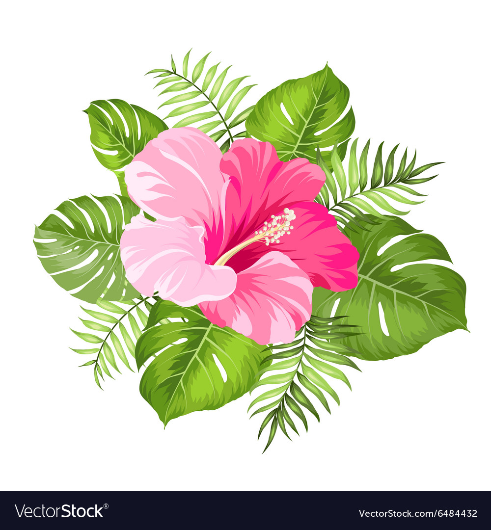 Tropical Flower Garland Royalty Free Vector Image