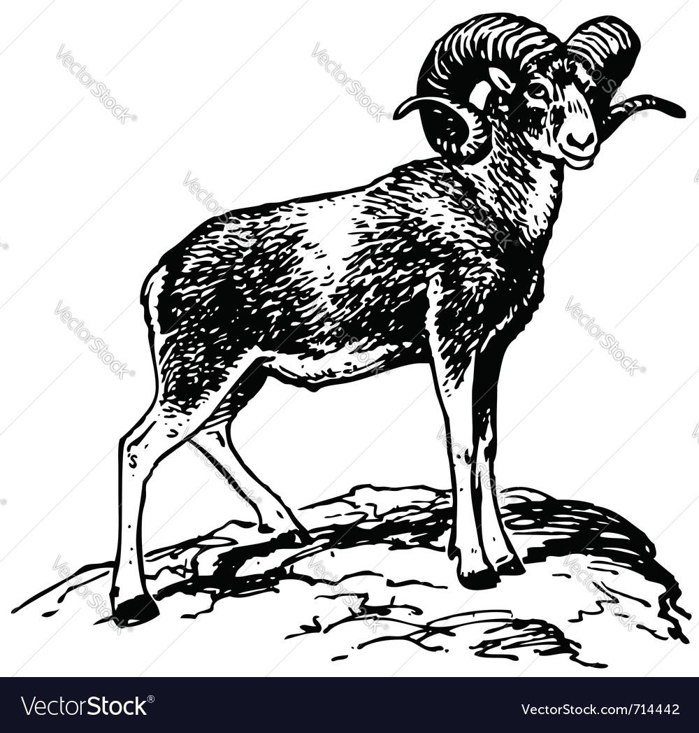 Argali mountain sheep vector image
