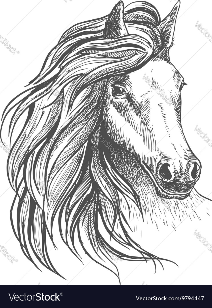 Horse head sketch with wavy mane