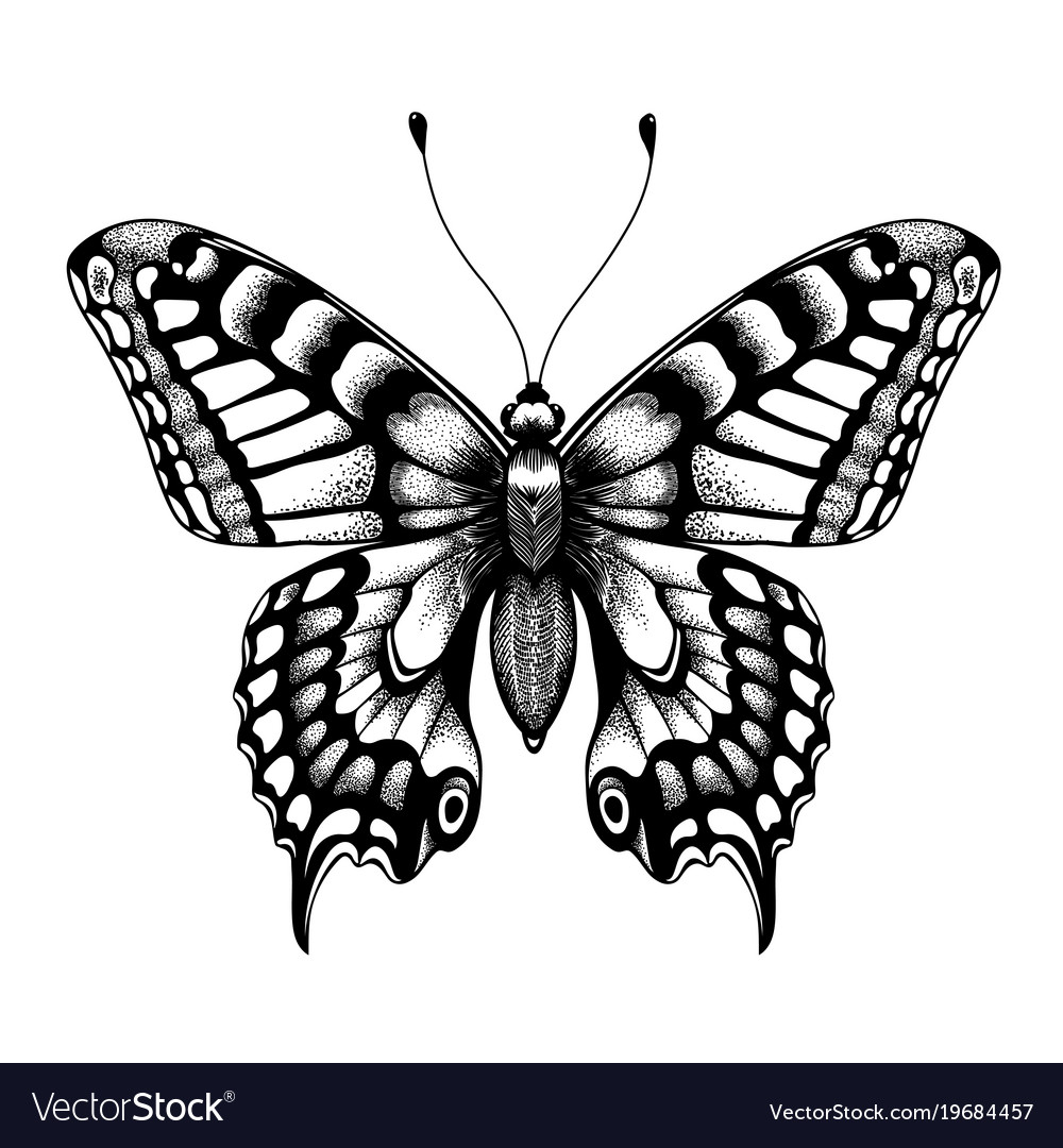 e66707d3d6767 Silhouette of butterfly black and white tattoo Vector Image