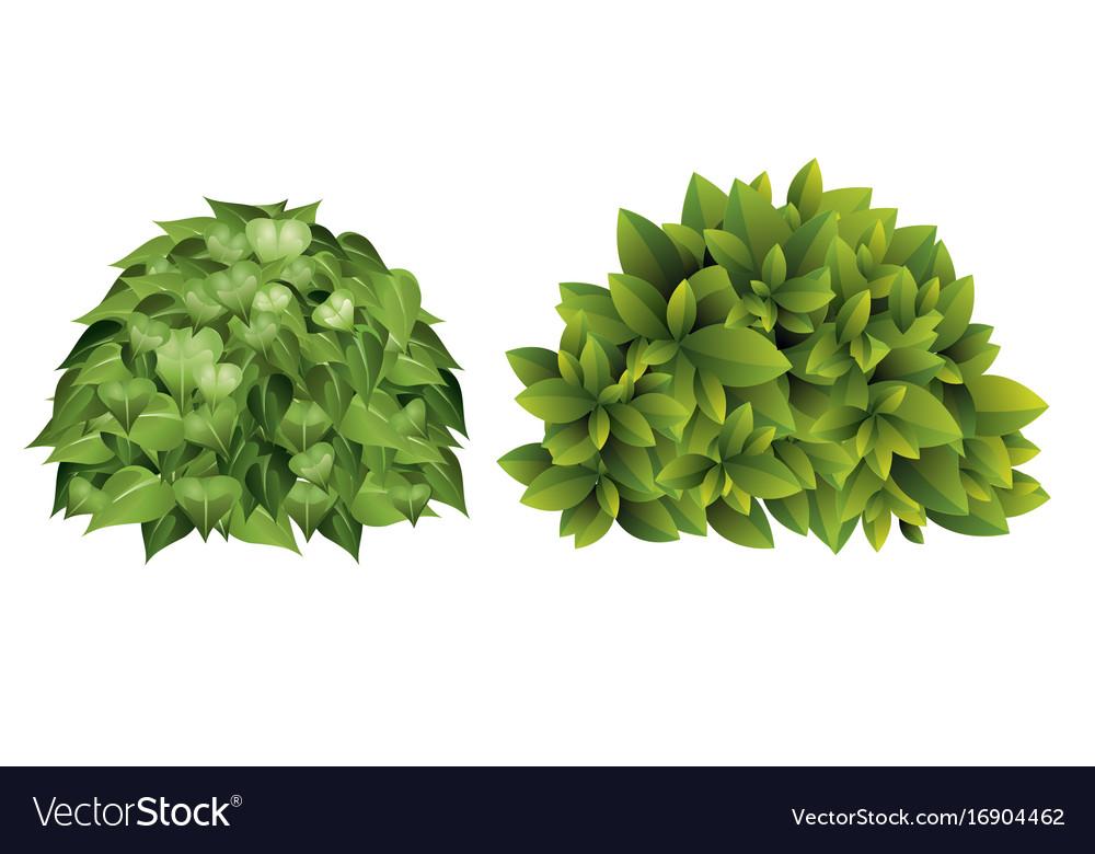 Garden bush with green