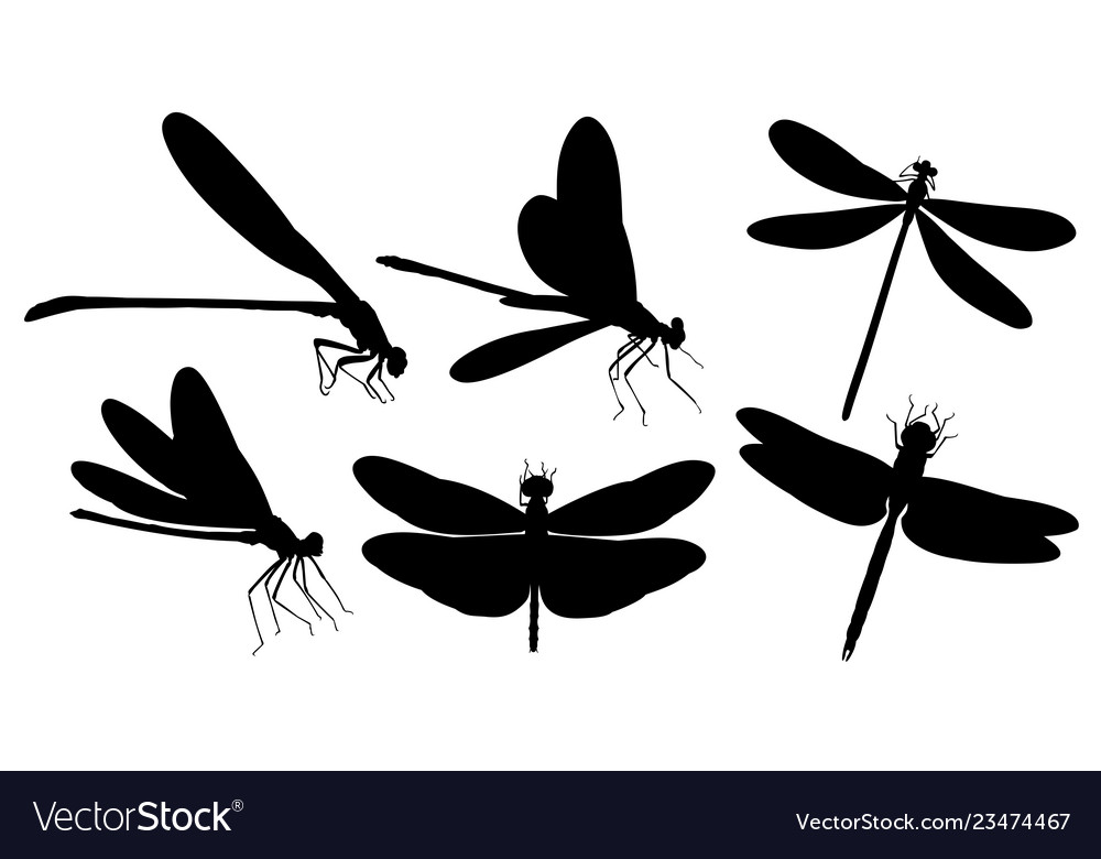 Dragonfly Silhouettes Royalty Free Vector Image Not only do i have a really cool tutorial on how to make custom rhinestone designs for you.but it's silhouette challenge group day and that means. vectorstock