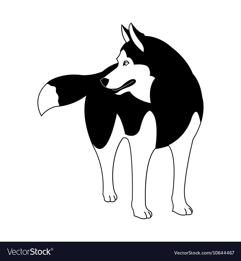 Siberian Husky silhouette on a white background