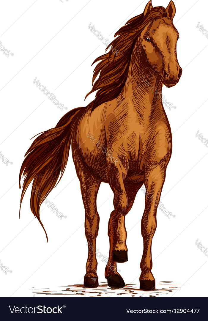 Arabian brown horse stomping hoof sketch
