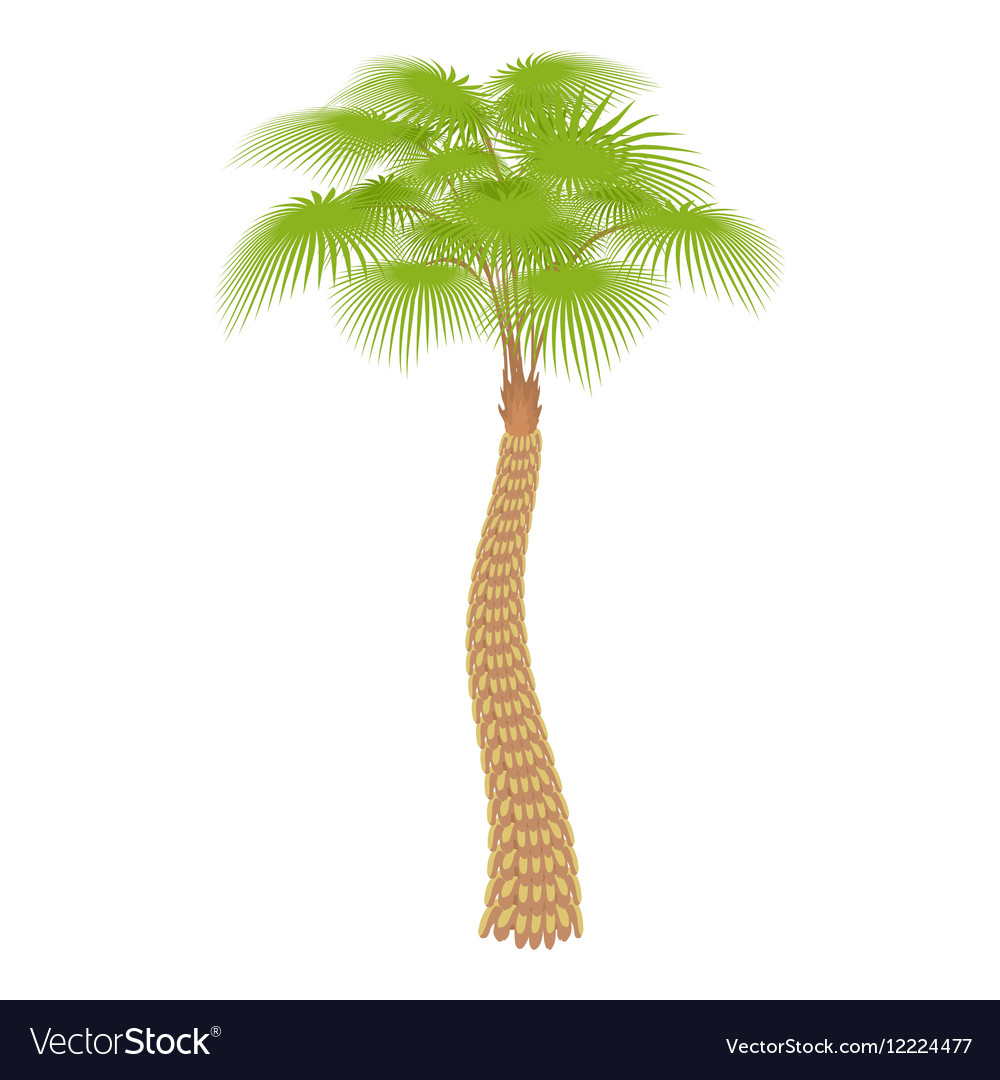 Big palm tree icon cartoon style vector image