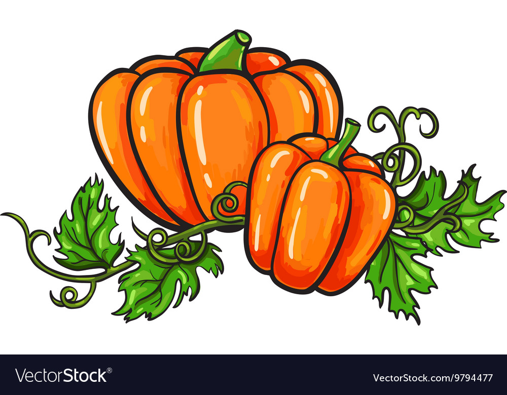 Pumpkin drawing Isolated cartoon vegetable