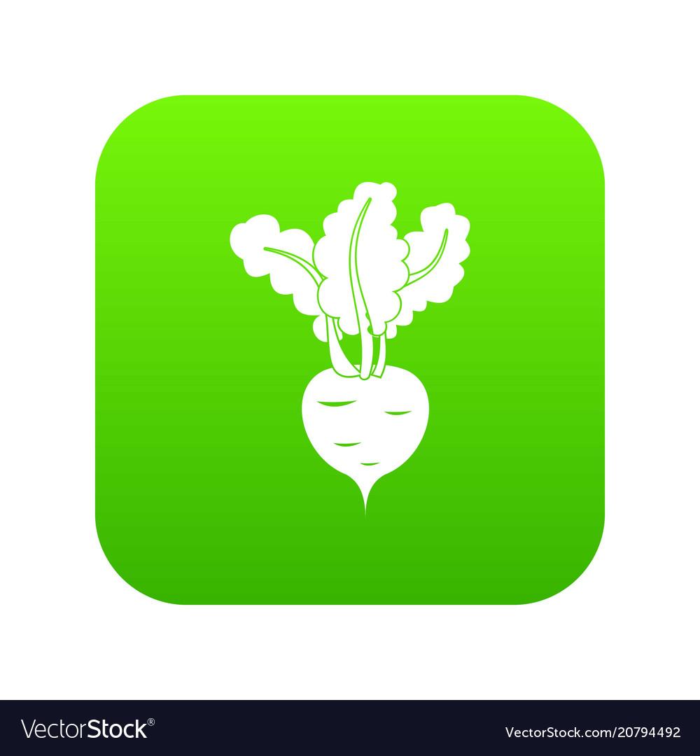 Fresh beetroot icon digital green