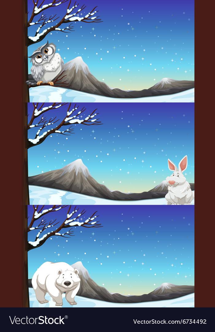 Wild animals in winter time