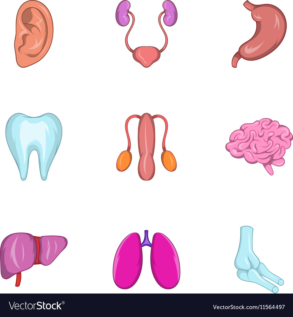 Internal organs icons set cartoon style