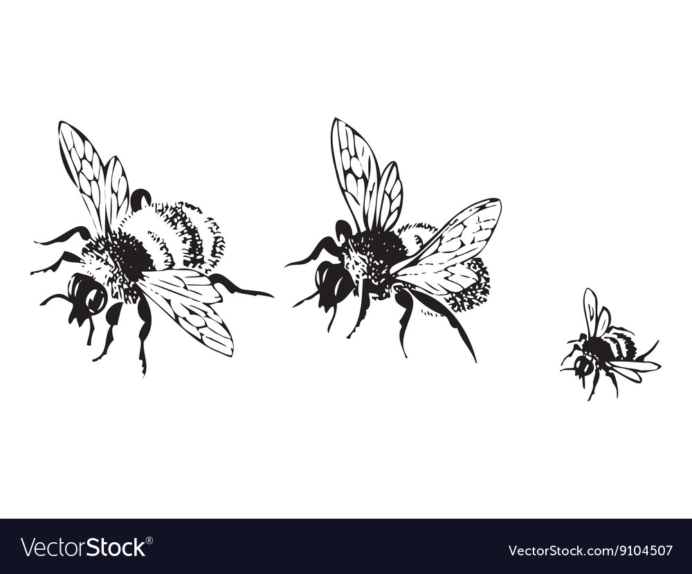 Flying bees isolated on white background