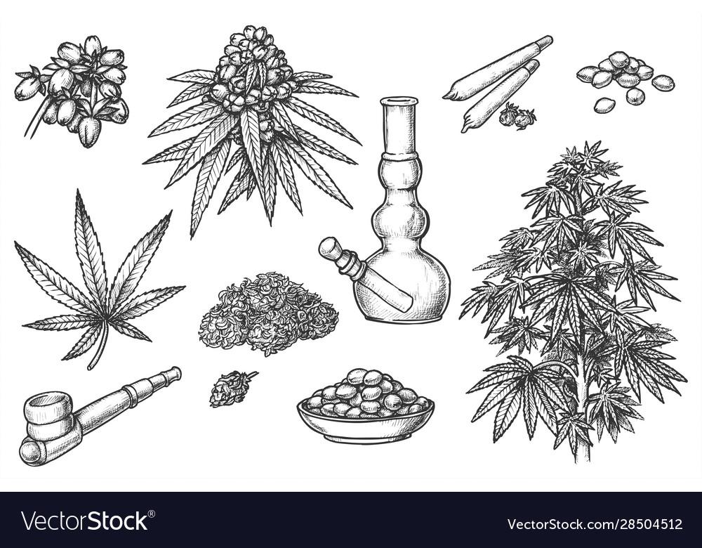Set sketches for marijuana items hemp leaves