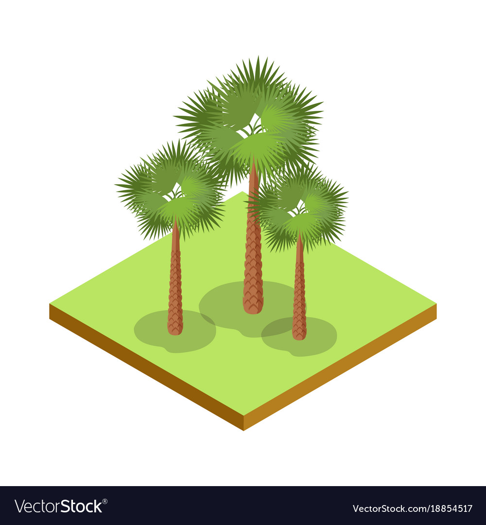 Palm tree isometric 3d icon