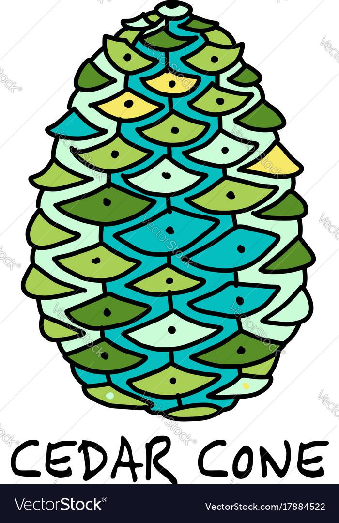 Cedar cone sketch for your design vector image