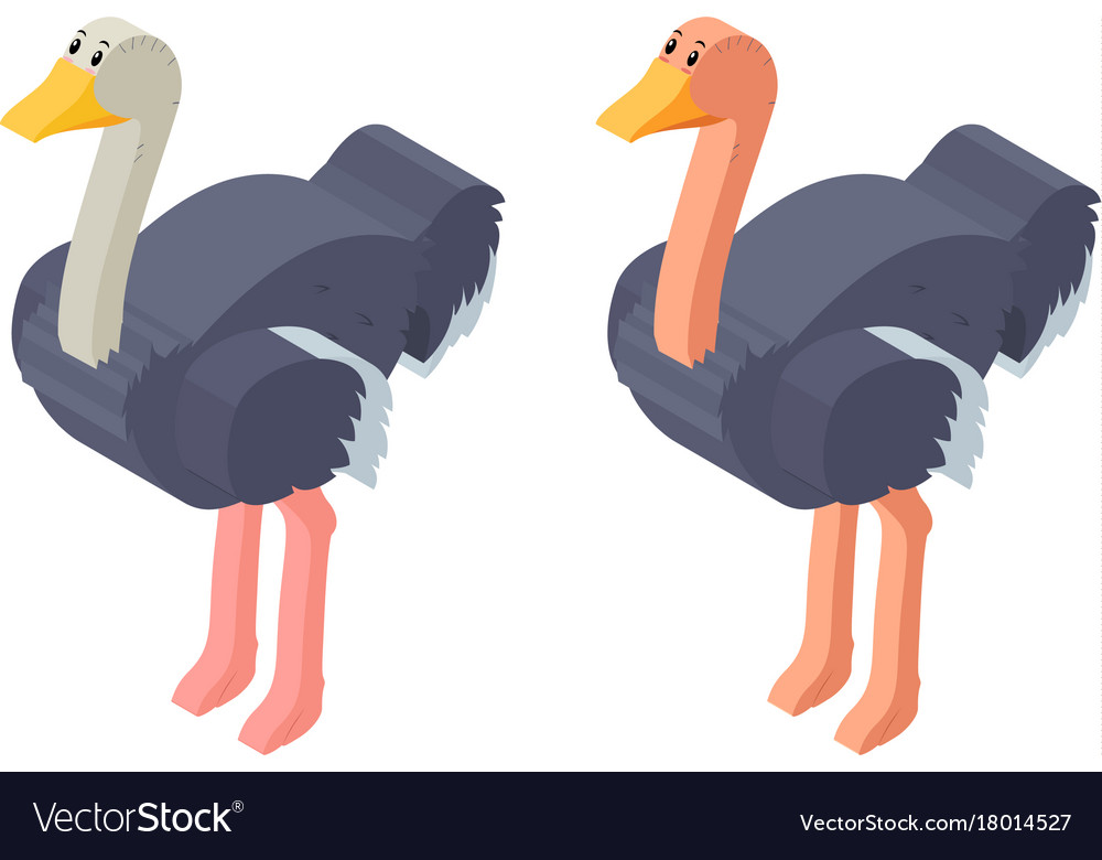 3d design for ostrich birds