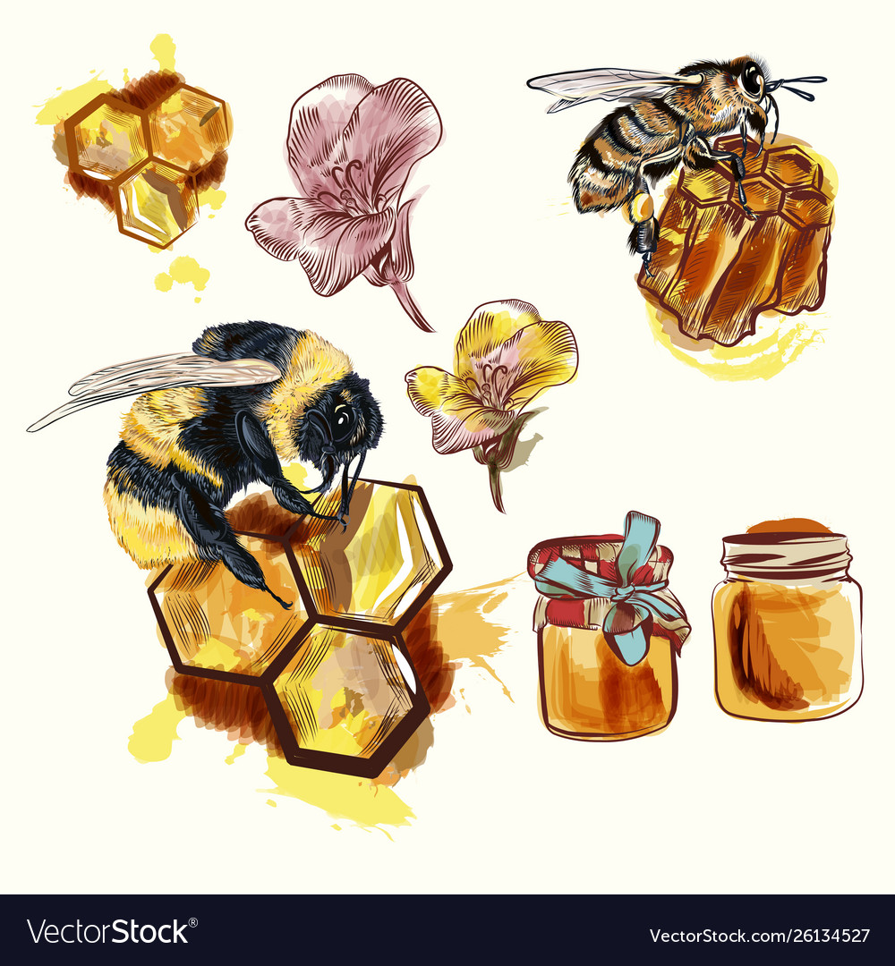 Hand drawn bees and honey isolated on white vector