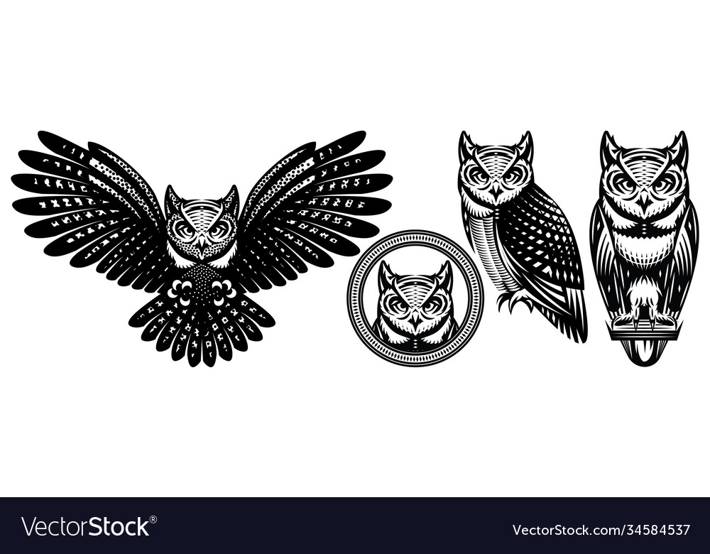 A set owls in different positions