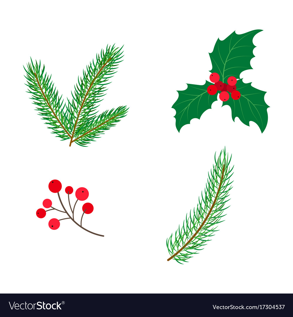 Flat holly spruce leaves branch berry set