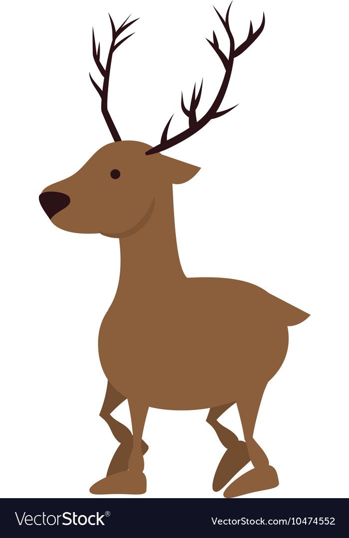 Deer wildlife animal