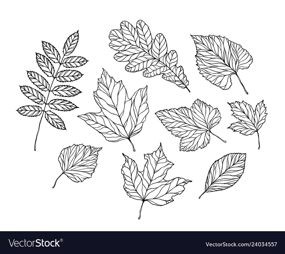 Set leaves nature foliage sketch decorative