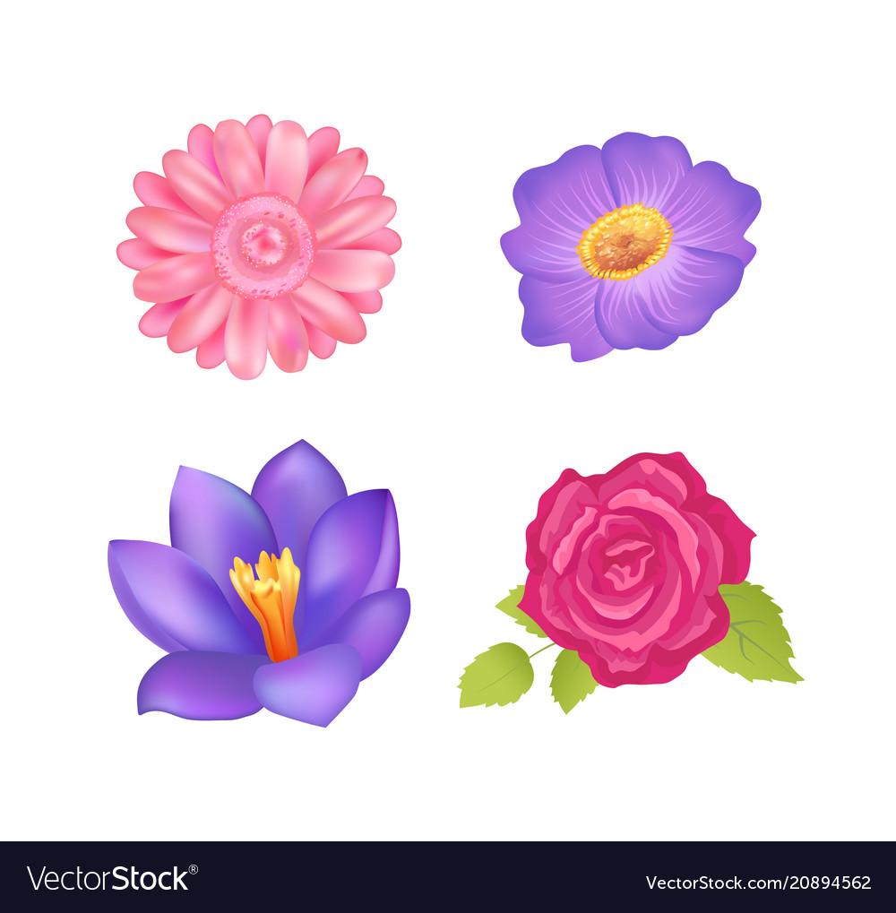 Flowers set poster decor