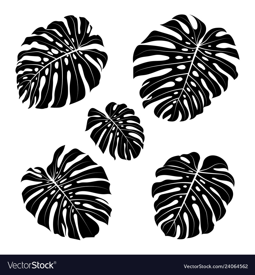 Monstera leaf outline black silhouettes tropical