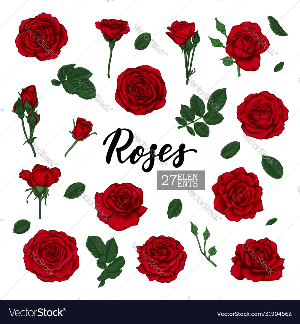 Set collection red roses and leaves realistic
