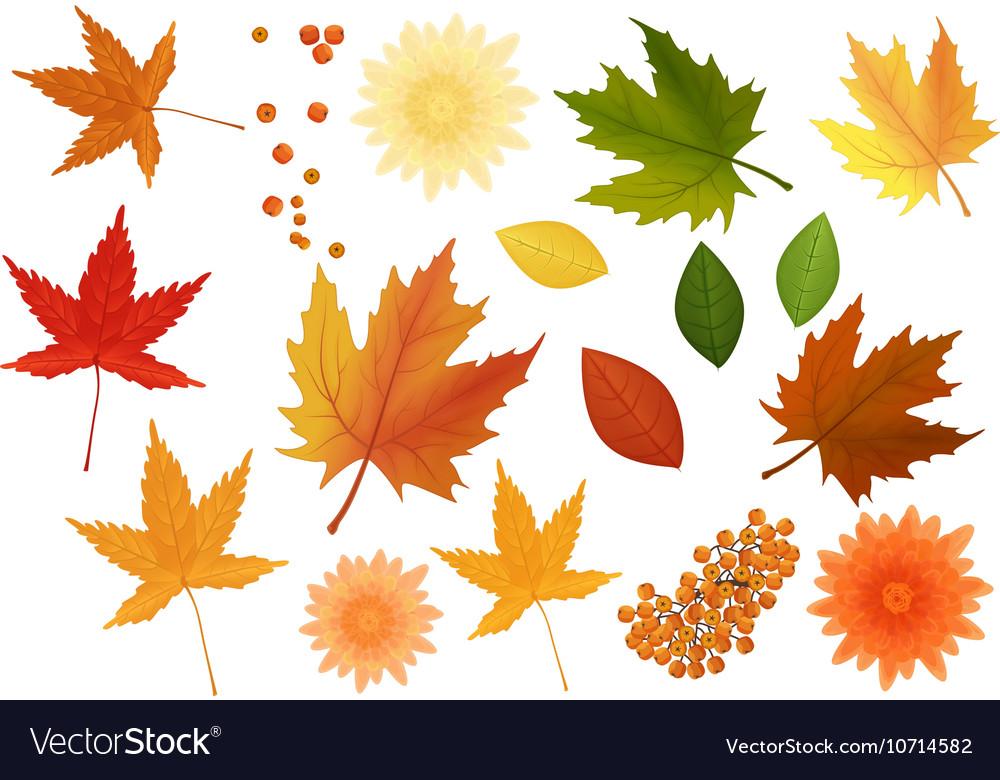 Beautiful colourful realistic autumn leaves and