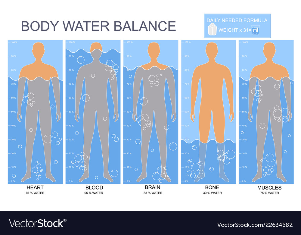 Cartoon body and water chart infographics card
