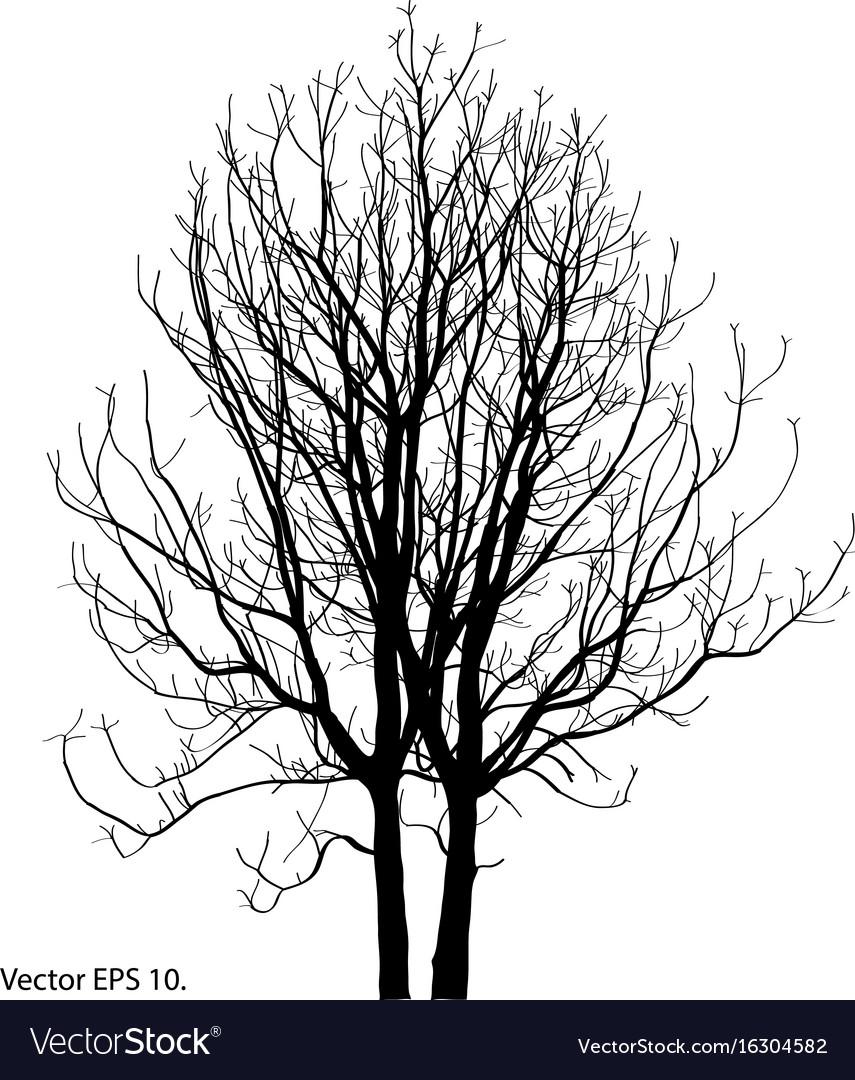 Tree branch winter dead bare forest art vector image