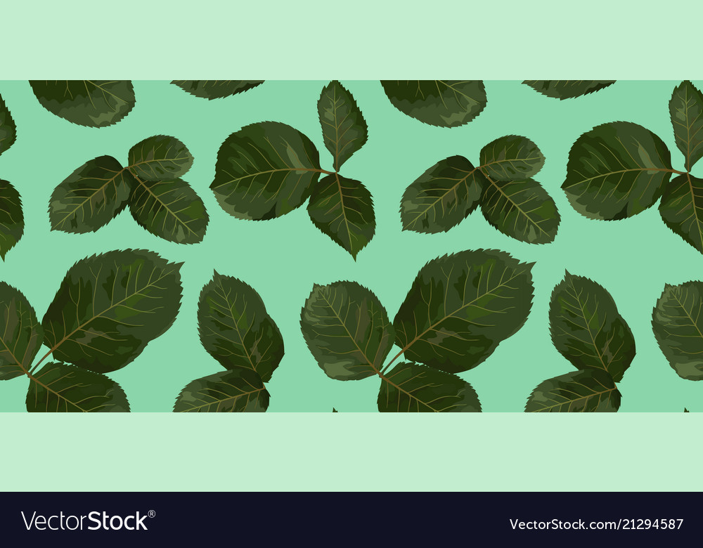 Pattern of green leaves of rose watercolor
