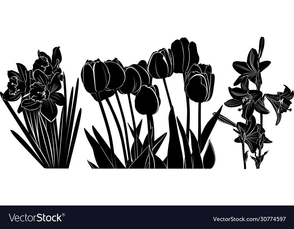 Flowers tulips daffodils lilies