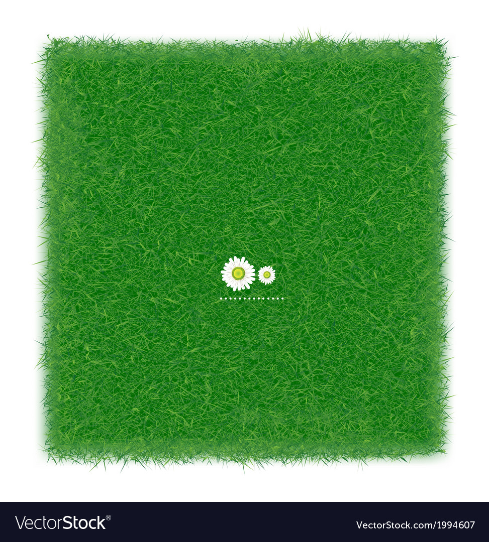 Green grass realistic textured background isolate vector image