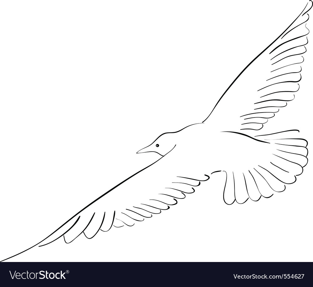 Black drawing of seagull isolated on the white