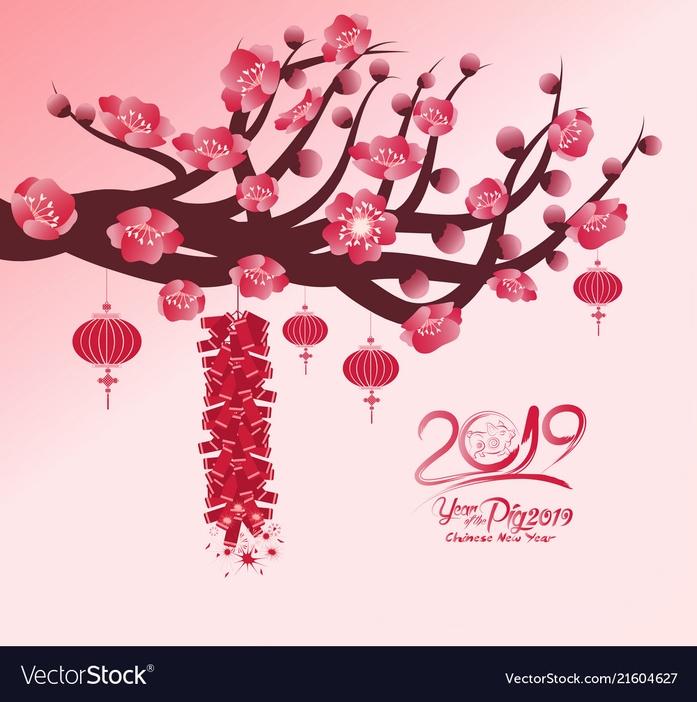 chinese new year 2019 background blooming sakura vector image