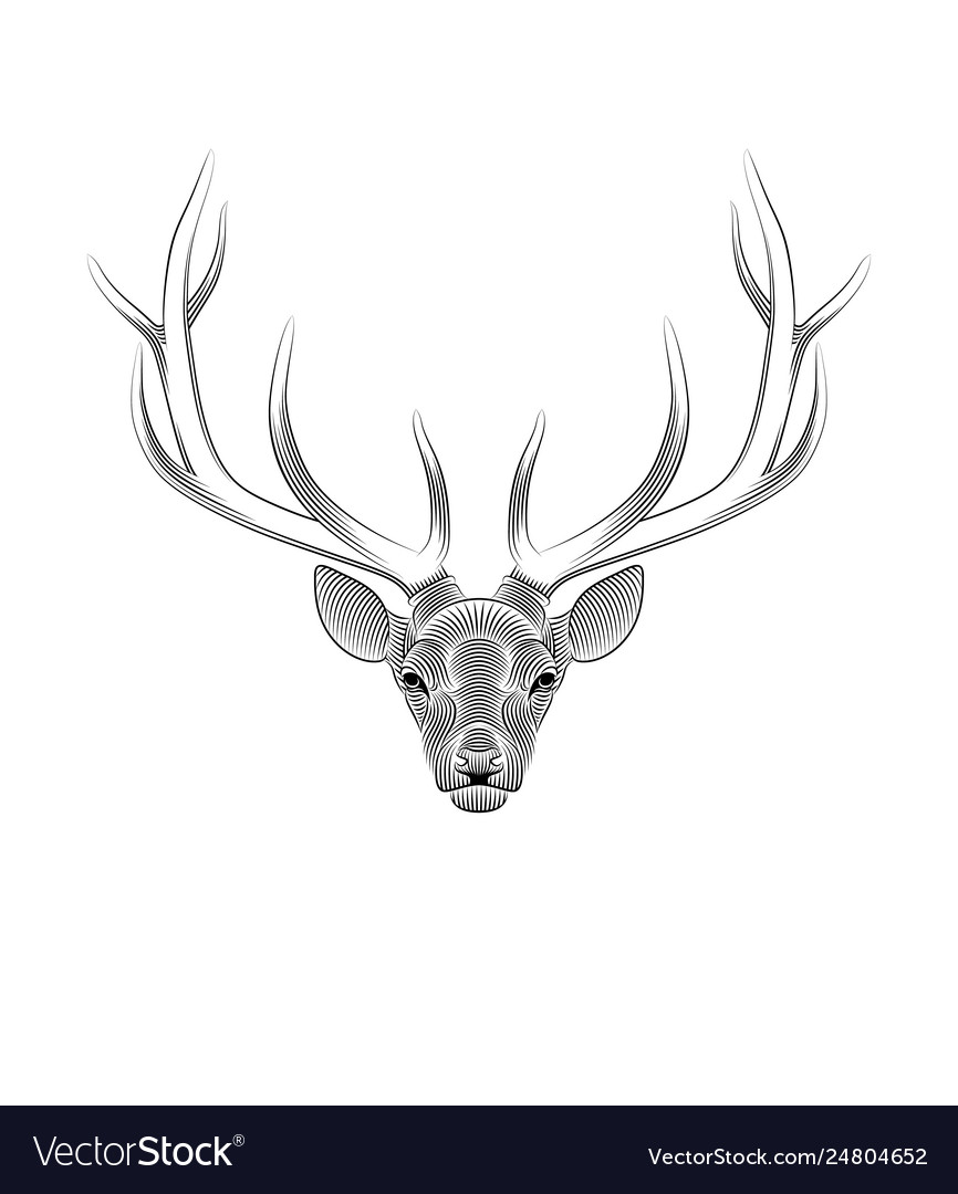 Stylized deer on white background portrait a