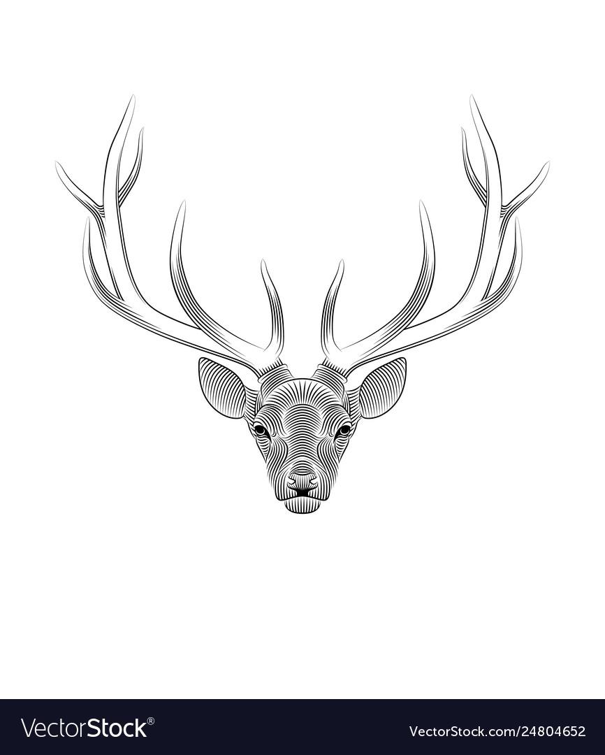 Stylized deer on white background portrait