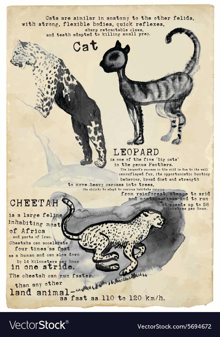 Cat Leopard Cheetah - placard Royalty Free Vector Image