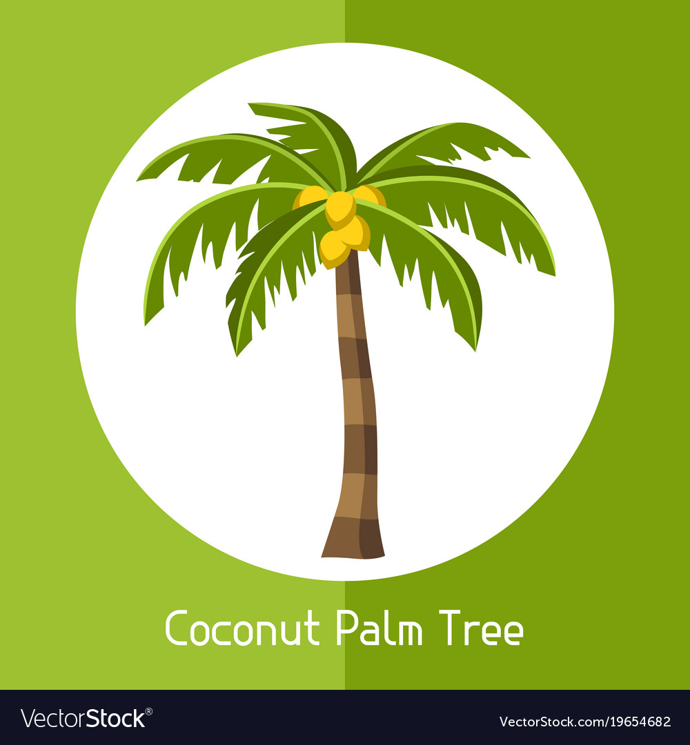 Coconut palm tree of exotic tropical