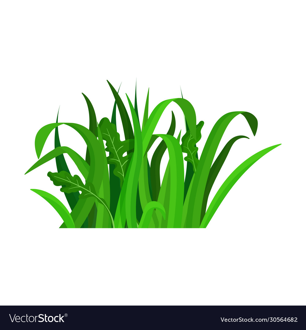 green grass iconcartoon icon royalty free vector image green grass iconcartoon icon royalty free vector image